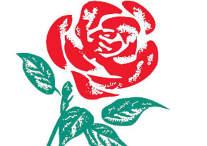 Labour Party rose